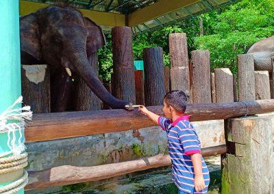 Percutian Menarik Pusat Konservasi Gajah Kebangsaan Kuala Gandah